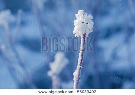 Lonely Snowy Twig