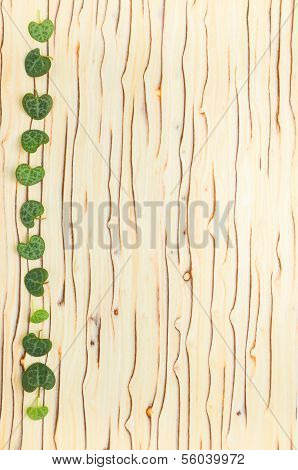 Leaves Ceropegia Woodii On Wood Texture, `ice Tree`
