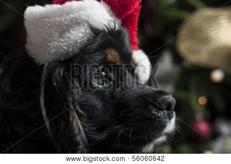A Cute Cocker Spaniel In Front Of A Christmas Tree With A Santa Hat