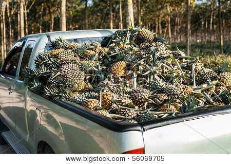 Pineapple On The Truck