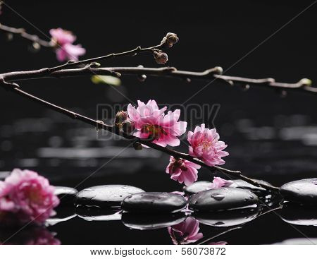 Spa still life with flowering branch of the cherry-tree