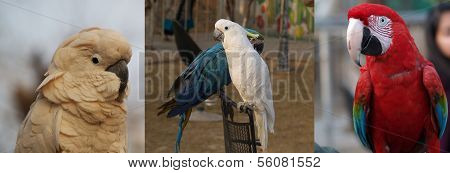 Awesome red macaw vs white moluccan