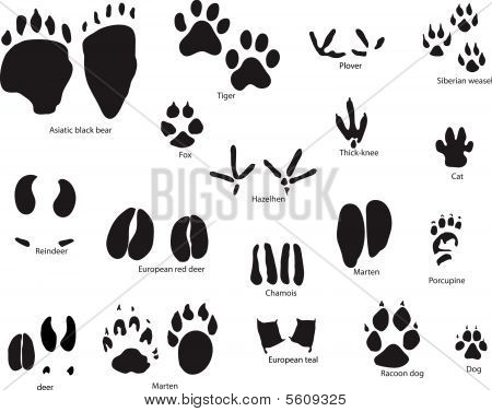Animals Trail Set
