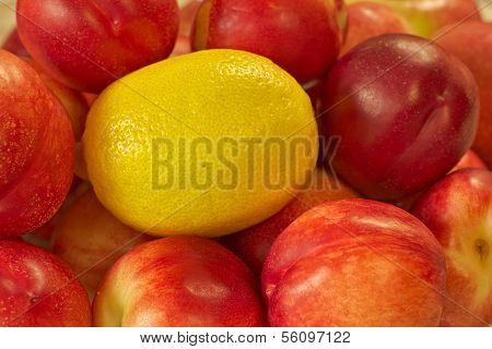 Lemon and Nectarines