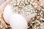 image of dainty  - Three plain white undecorated Easter eggs nestling in a straw nest with a delicate dainty spray of Babys Breath flowers to celebrate springtime and the Easter holiday - JPG