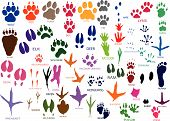 stock photo of opossum  - Vector paw prints of animals and birds - JPG