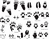 pic of paw-print  - Biggest collection of animal and bird trails with title - JPG