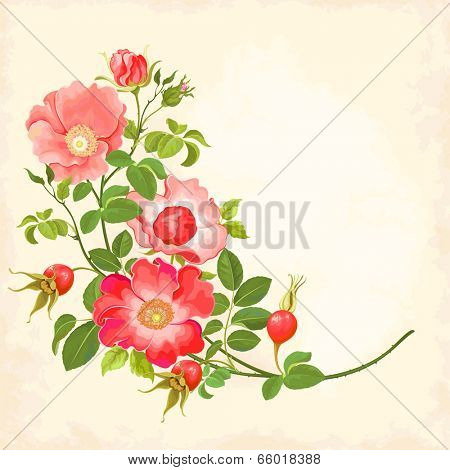 Branch with flowers and rose hips.