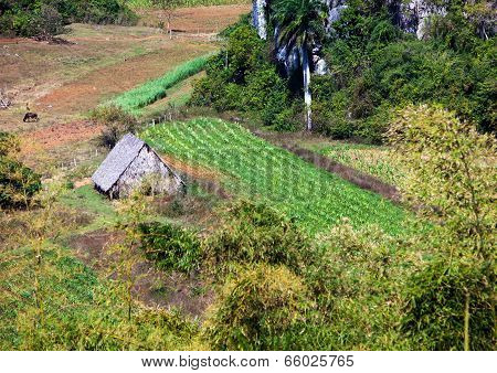 Hut in the field. Cuba. Vinales Valley