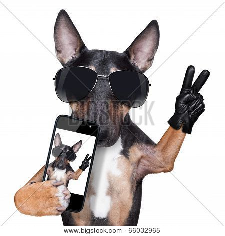 Bull Terrier Dog Selfie