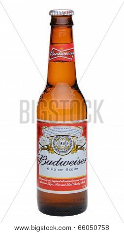 Single Budweiser Bottle
