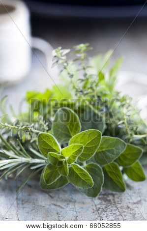 Fresh herbs on bench, with twine.  Bouquet garni, with focus on oregano.