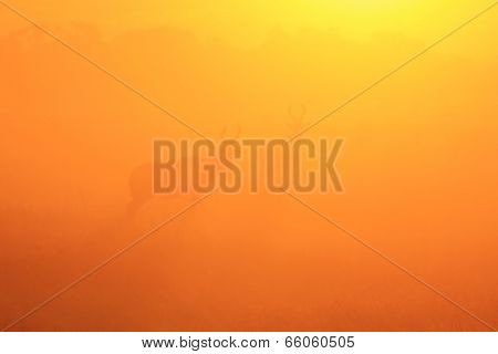 Sunset Silhouettes - Wildlife and Nature Background - Red Hartebeest Gold