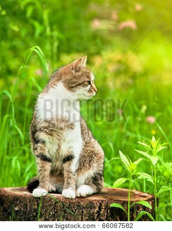 Sitting cat in green grass on stump