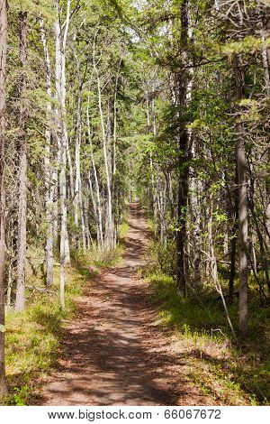 Taiga Boreal Forest Summer