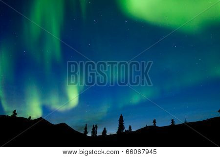Dancing Northern Lights Spruce Taiga Yukon Canada