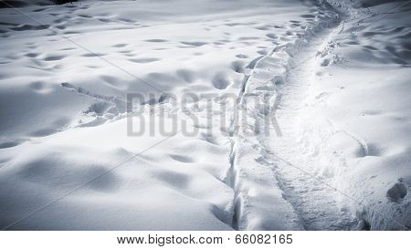 Many Tracks And Footprints In The Snow