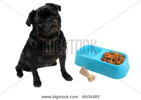 Pug And Dogfood