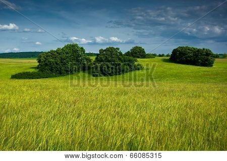 Long grass in the pasture.