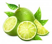 picture of lime  - Vector illustration of fresh limes with leaves - JPG