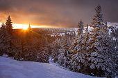 picture of snowy hill  - Sunrise near Praded mountain in Jaseniky - JPG