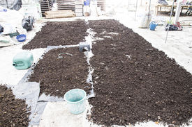 picture of excrement  - pile of natural manure fertilizer made from cow excrement - JPG