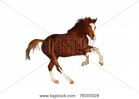 Chestnut Horse Galloping Free Isolated On White