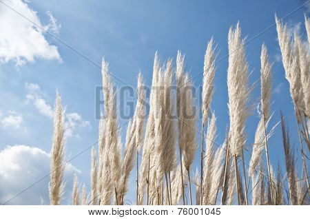 White plants on blue sky background