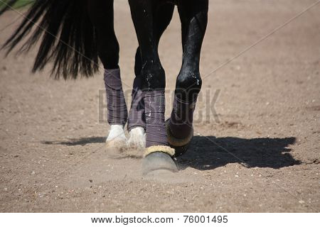 Black Horse Legs With Bandages And Hoof Boots