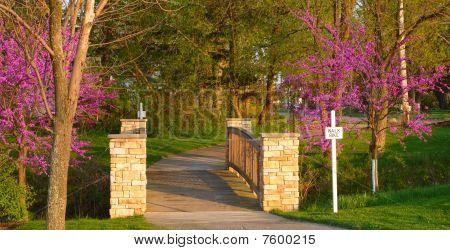 Bridge Between Blossoms