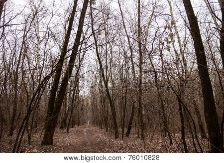 The Path In A Leafless Forest