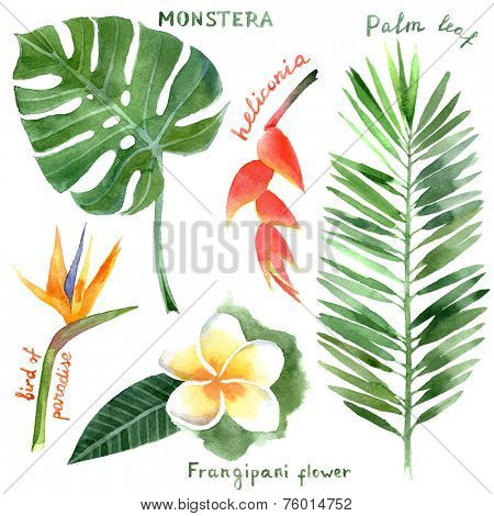 hand drawn watercolor tropical plants