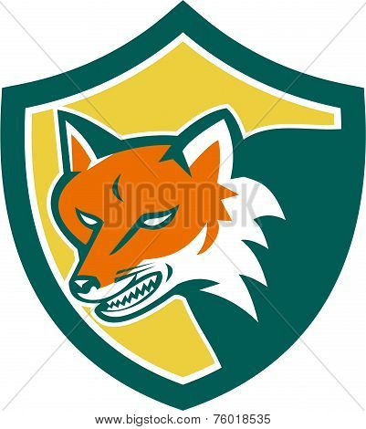 Red Fox Angry Head Shield Retro