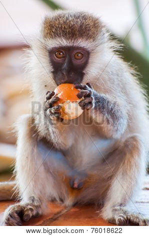 monkey Orange Thief