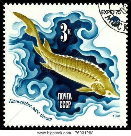 Vintage  Postage Stamp.  Sturgeon.