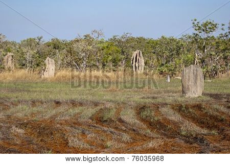 Magnetic Termite Mounds, Litchfield Natonal Park, Australia