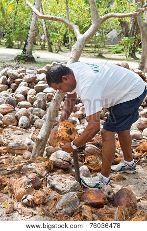 LA DIGUE, SEYCHELLES - 21 OCTOBER 2014 - Man Splitting Coconuts at Historical L'Union Estate Mill, La Digue, Seychelles on 21 October 2014