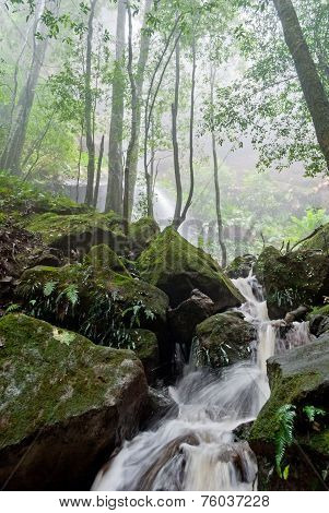 Mysterious Peaceful Forest And Water Stream