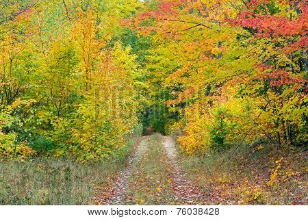 Autumn Two Track