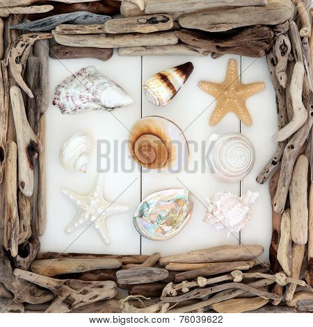 Sea shell selection and driftwood border over wooden white background.