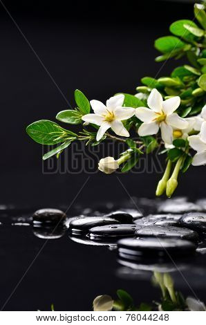 still life with gardenia on wet black pebbles