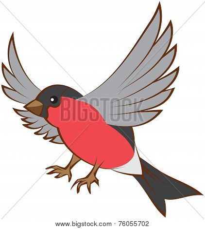 Flying bullfinch opened wings