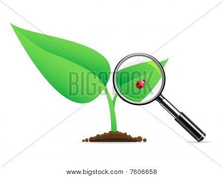 Magnifying glass an ladybug