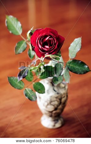 Wilted Rose
