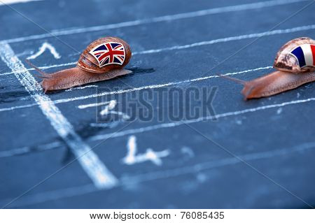 Snails Race Metaphor About England Against France