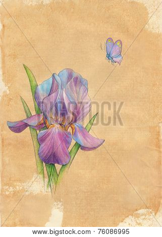 Drawn By Hand Card. Butterfly And Flower An Iris