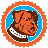 picture of mongrel dog  - Illustration of a bulldog dog mongrel head mascot showing tongue set inside rosette on isolated background done in retro style - JPG