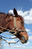 stock photo of workhorses  - A portrait of a workhorse - JPG