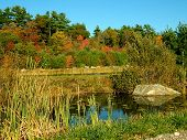stock photo of northeast  - This pond is located in a cranberry bog in the northeast during fall season - JPG