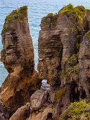 image of vegetation  - Pancake Rocks; Punakaiki New Zealand